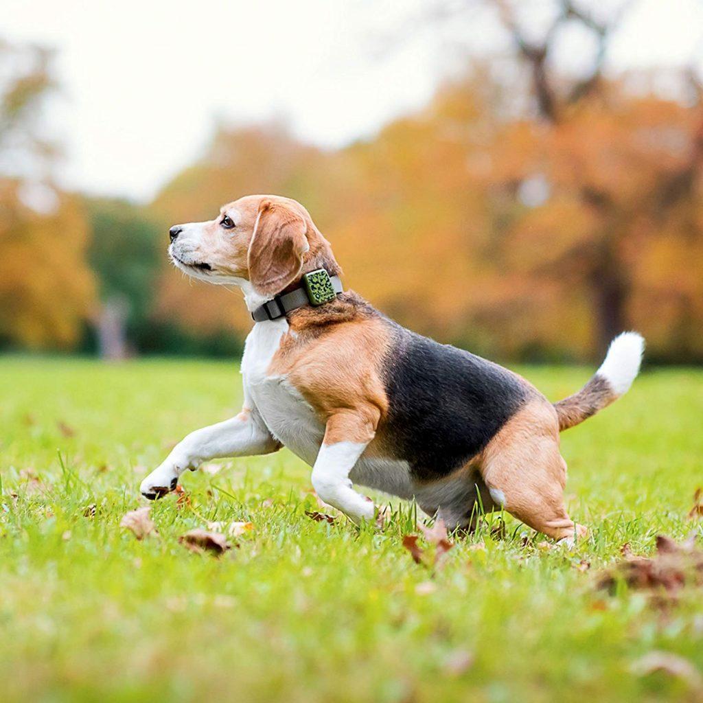 collier gps chien avis test